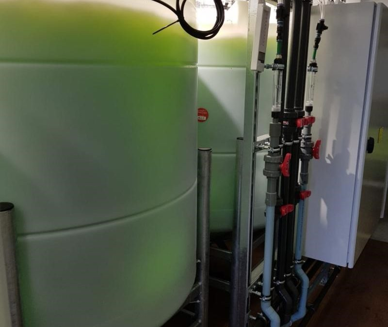 75m³ per day algal treatment plant on site and removing both Phosphorus and Ammonia to trace levels
